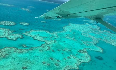 Planète : En 2020, le blanchissement de la Grande Barrière de corail « plus étendu » qu'auparavant