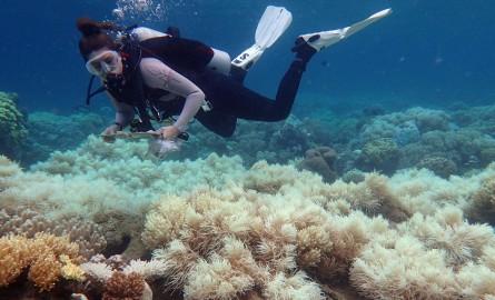En Australie, hécatombe «catastrophique» de coraux dans la Grande barrière