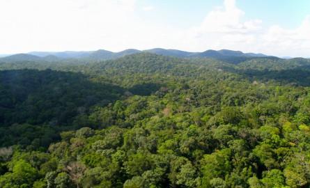 L'ONF va bientôt payer la taxe foncière en Guyane