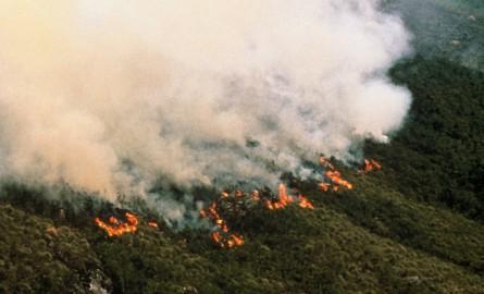 Amazonie : La déforestation, «cause principale» des incendies selon un chercheur