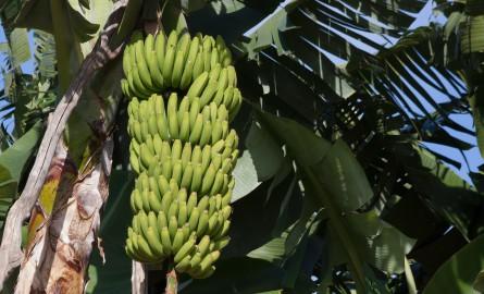 Chlordécone aux Antilles: Le colloque international sur le Chlordécone s'ouvre demain en Martinique