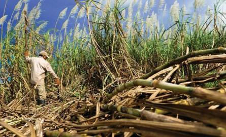 Salon international de l'Agriculture : Agriculture et agroalimentaire, un gisement d'emplois pour les Outre-mer ?
