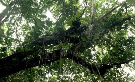 Environnement : L'Office nationale des Forêts s'engage dans le « Zéro phyto» notamment en Guadeloupe