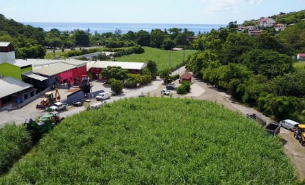 Economie verte-Martinique : La distillerie Neisson obtient «le Green Rum Compagny of the Year» par le Caribbean Journal