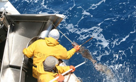 Filière Pêche : Que représente la pêche australe à la Réunion ?