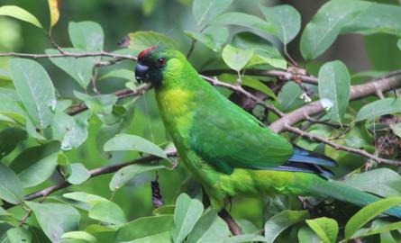 Nouvelle-Calédonie: La nature pourrait avoir un statut de personnalité juridique