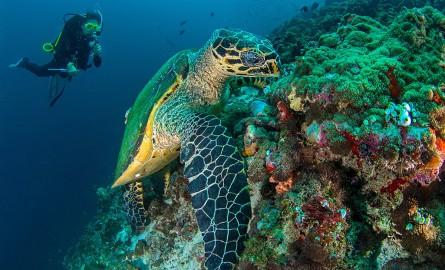 Biodiversité: Les Seychelles créent une vaste réserve maritime