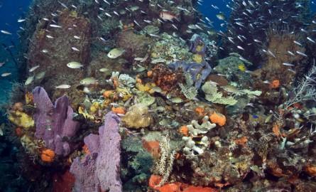 Réchauffement climatique : Les canicules marines en plein boom menacent les écosystèmes