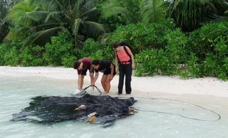 À Wallis et Futuna, une campagne de collecte des DCP dérivants lancée